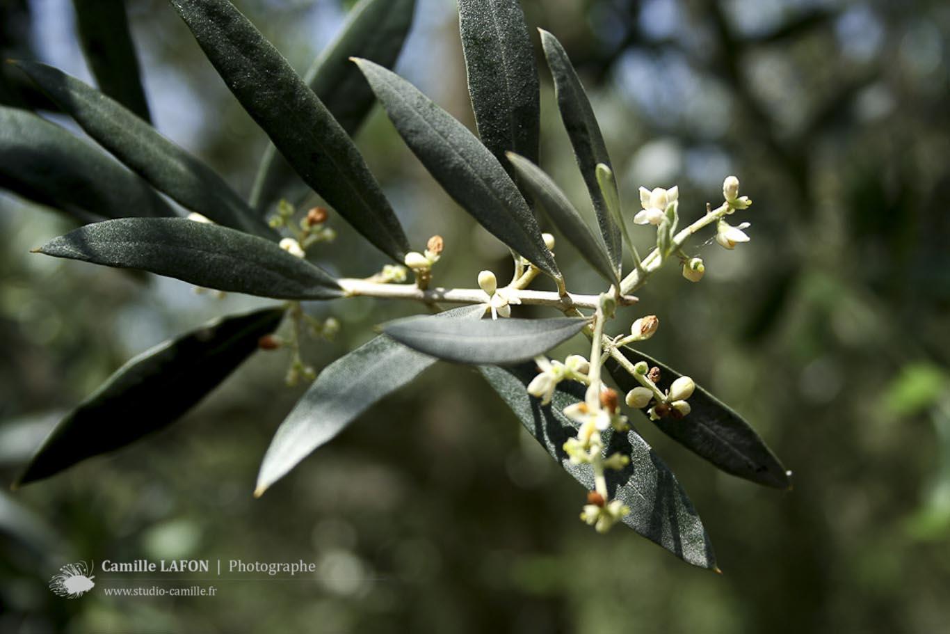 photographe-montpellier-ecorce-arbre-orange.jpg