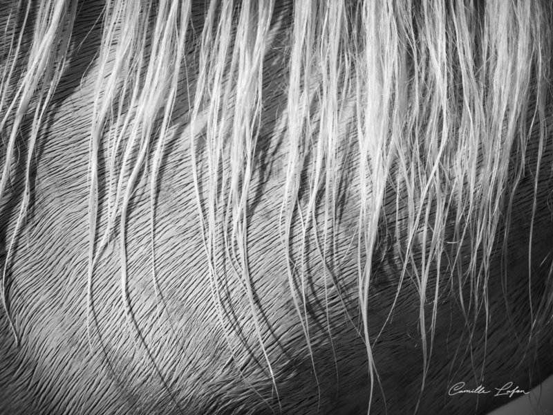 photographe-cheval-plage-aresquiers-aquatique